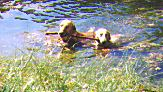 Tosca and Charlie swimming in the pond